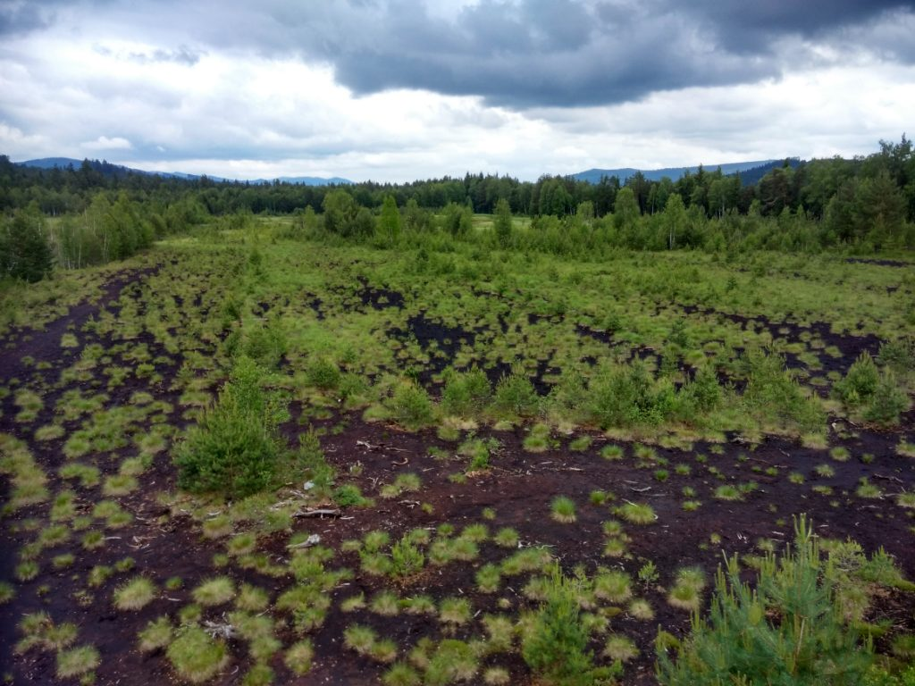 Soumarské rašeliniště